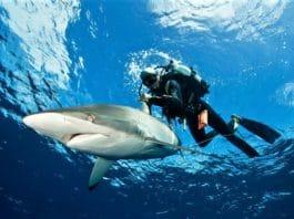 pionero de la inmersión