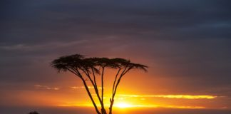 Reserva Nacional Masai Mara Gran Migración del Serengueti